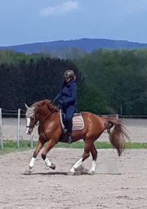 Pahmeyer Pferde-Osteopathie Training Reitunterricht ganzheitlich